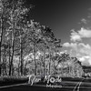 1456  G Aspens Along Road BW