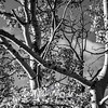 1429  G Aspens Close Sharp BW