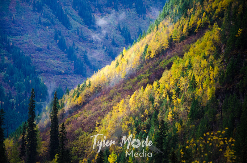 1571  G Hillside Fall Color