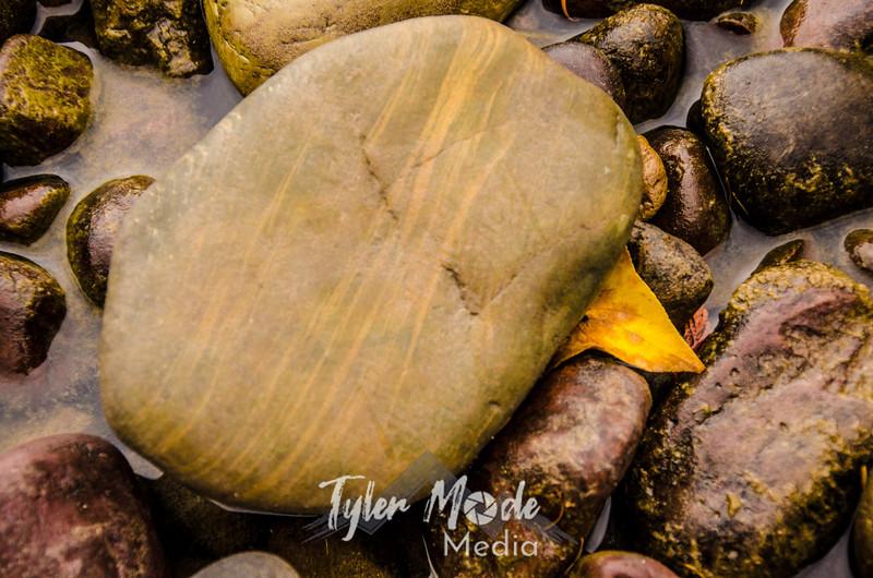 1307  G Lake McDonald Fall Rock and Leaf Sharp