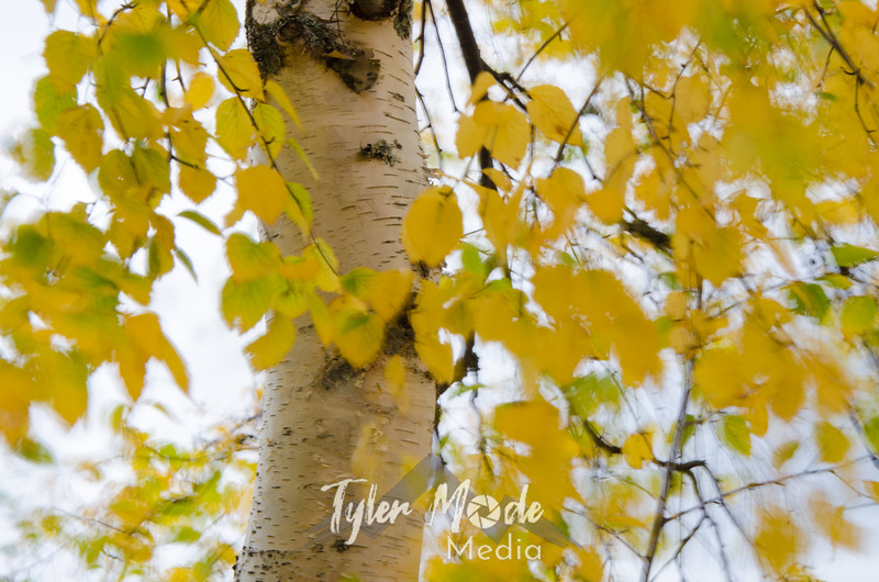 1161  G Birch Close Wind