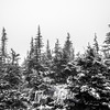 1676  G Trees Fog and Snow Sharp BW