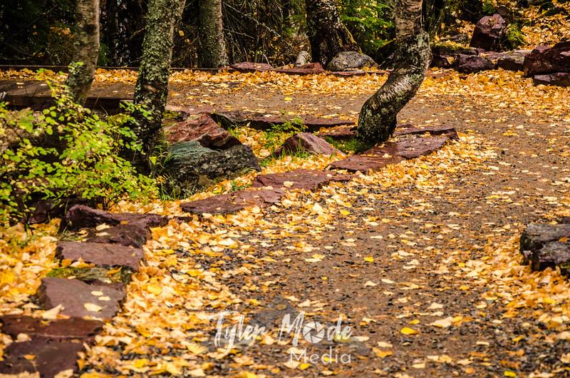 1187  G Fall Path Sharp