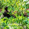 874  G Black Bear in Bushes