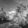 1206  G Aspens and Road BW