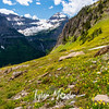 1945  G Mountains and Glacier Lilies