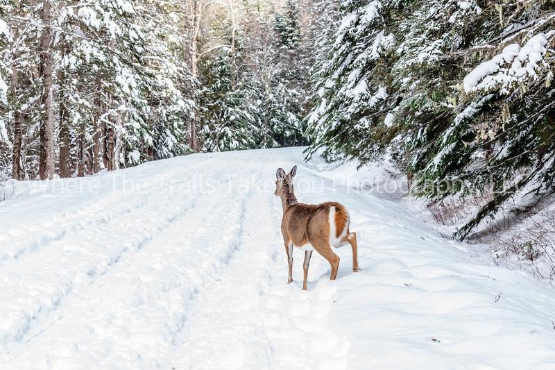 86.  Deer In The Road