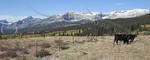 Montana Ranchland