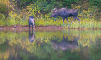 Moose Sighting at Fishcap Lake