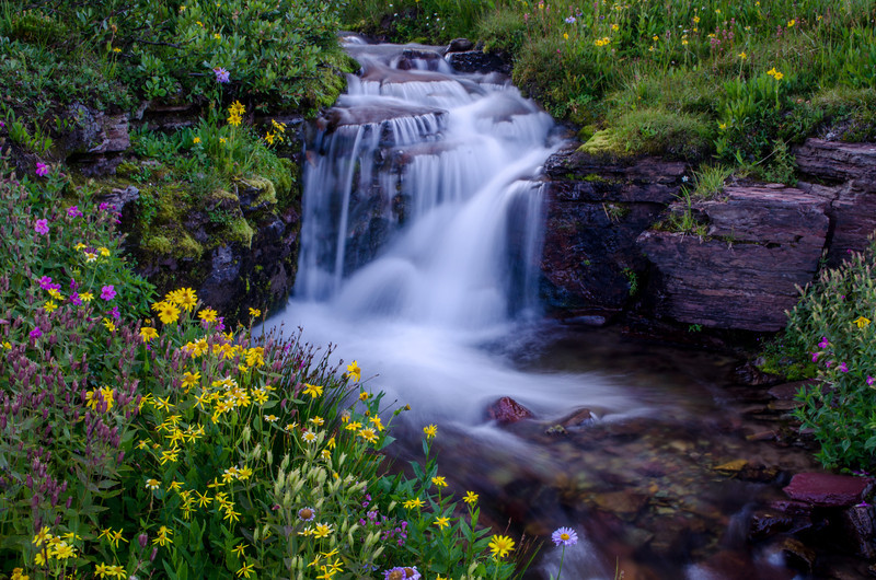 Cascades and Wildflowers - Glacier National Park