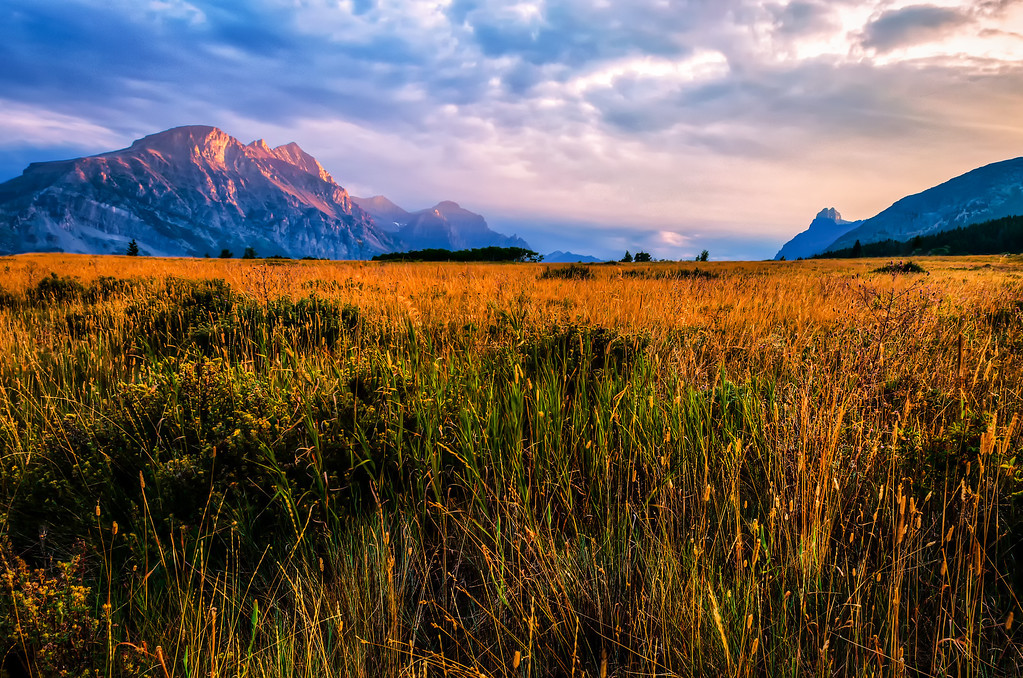 Glacier National Park - Sunset and Golden Field