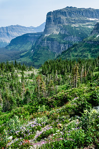 Overlook on the Going to the Sun Road, east of Logan Pass, Glacier National Park.