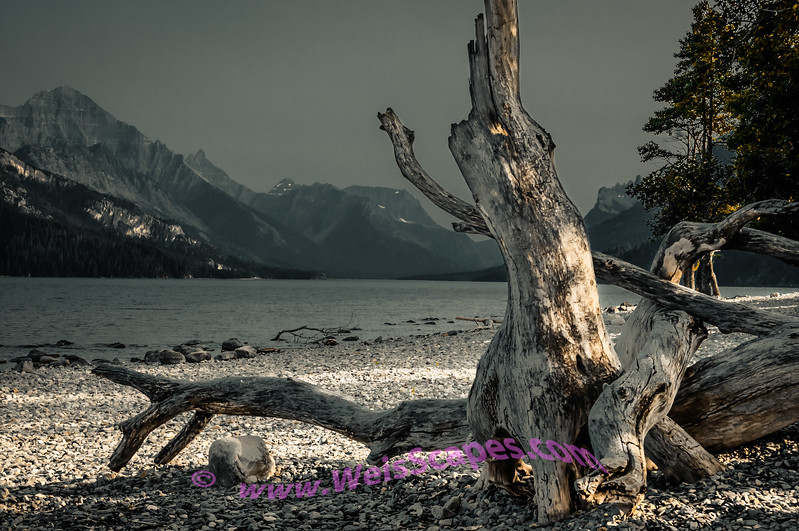 Diftwood on the shore of Upper Waterton Lake, Alberta Canada.