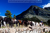 Horseback riding near Many Glacier in Glacier National Park