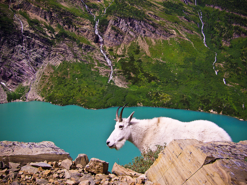 goat and Gun Sight lake