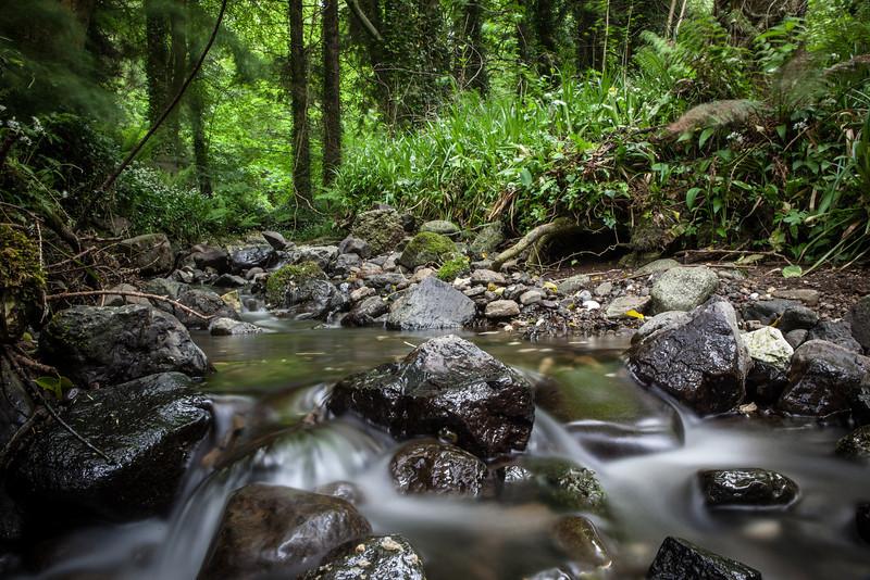 Glenarm Forest, Co. Antrim, Ireland