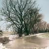 Trees & Ice