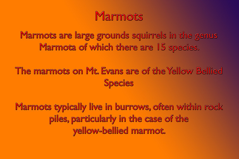 Marmots,type