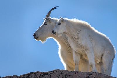 Goats & Gods