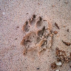 Paria Rimrocks Toadstools, Utah