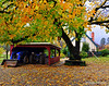 Chicago Park Autumn