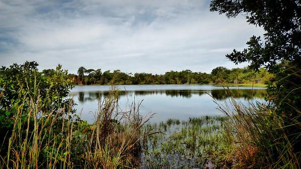 Golden Aster Scrub Preserve, Florida