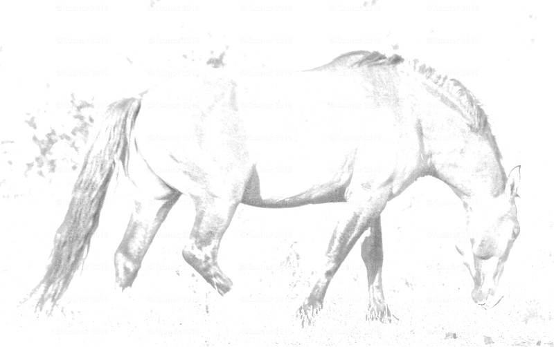 Grey Cheval<br /> A semi-wild stallion leads his small herd through the scrub and brush of the Okanagan wilderness.