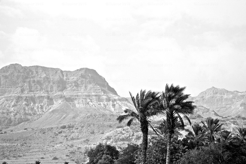 Hills of Israel<br /> The majestic escarpment around the Jordan Valley as seen from the windy shores of the rapidly disappearing Dead Sea at En Gedi.