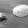 A dollar a shell