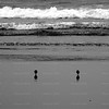 Foursome<br /> Four oystercatchers serenely search for tidbits along Long Beach's sands, perfectly spaced from each other, as though choreographed.