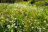 Wildflower0528