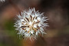 Wildflower0495