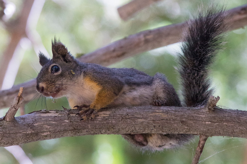 Squirrel0917