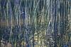 Reeds0863