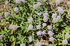 Wildflowers0895