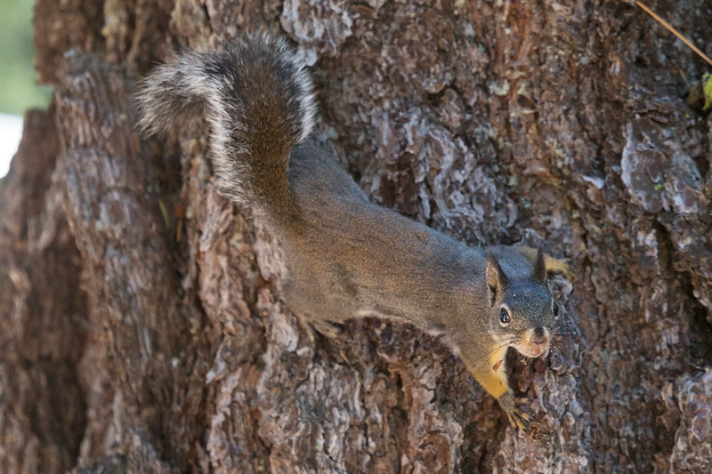 Squirrel0910