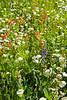 Wildflowers0527