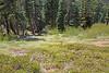 Meadow0893