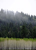 aspens_and_trees_01