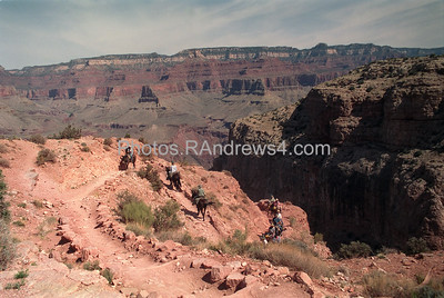 Mule train on Kaibab Trail, Grand Canyon National Park