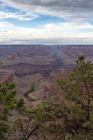 Thru The Trees The Canyon Waits