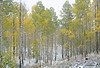Aspen starting to change just in time.