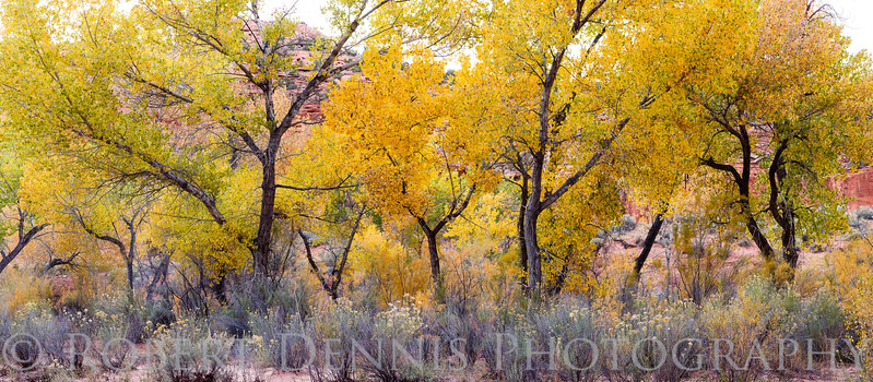 Fall at Grand Staircase