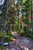 46.  Hiking Along The Jenny Lake Trail