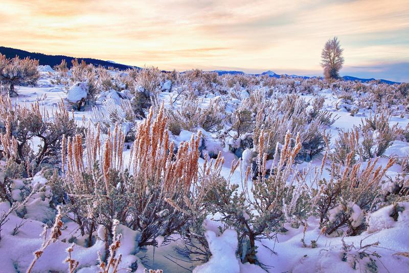 Winter Sagebrush at Sunrise, Grand Teton National Park