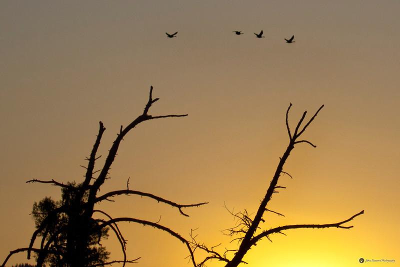 Sunrise in Jackson hole