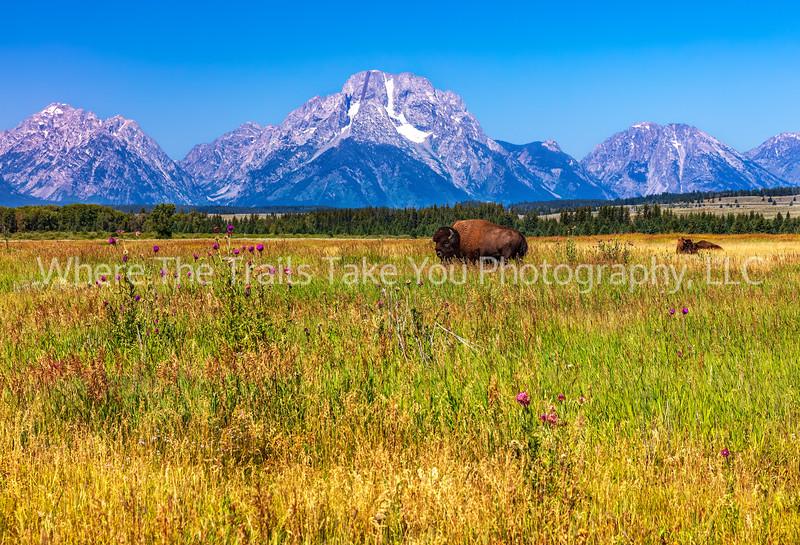 Grand Teton Scenery