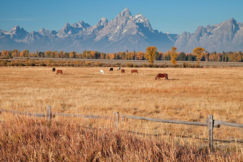 Horses grazing at Grand Teton National Park