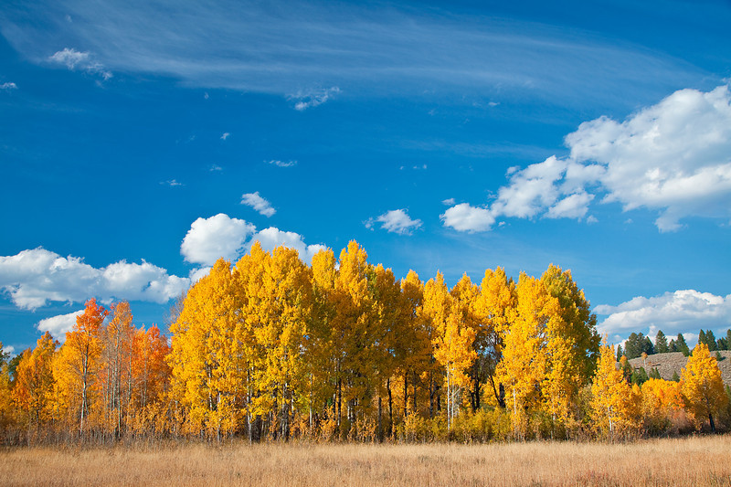 Fall Color at Grand Teton National Park