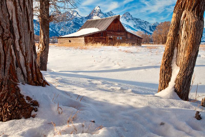 Trees framing Mormon Row Barn, Winter at Grand Tetons